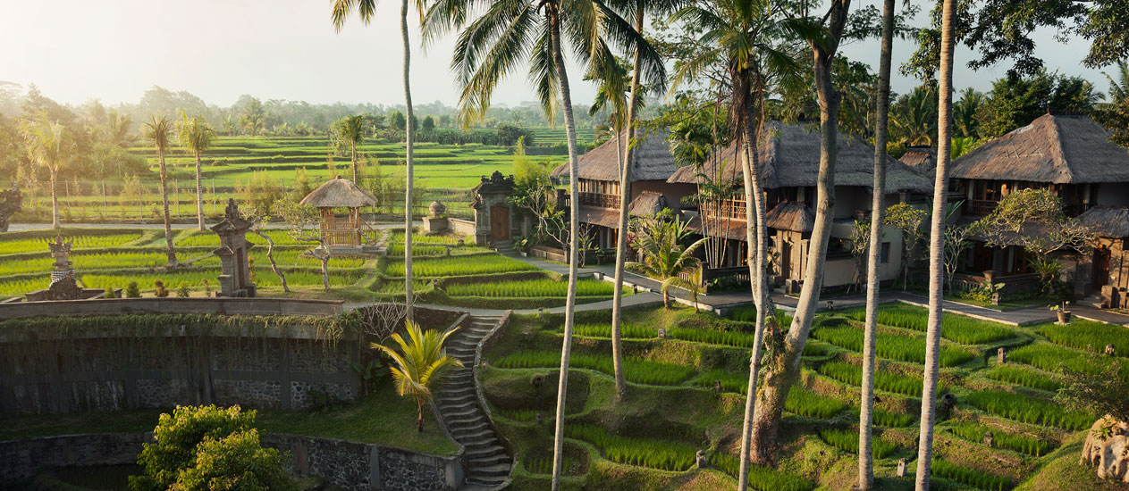 Terraced Rice Paddies overlooking from lobby and restaurnat at Kamandalu Ubud, Bali