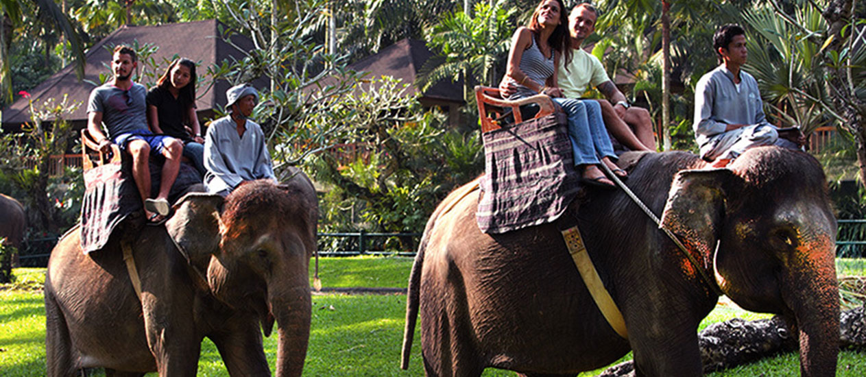 Elephant Safari Ride at Taro by Mason Adventure, Ubud, Bali