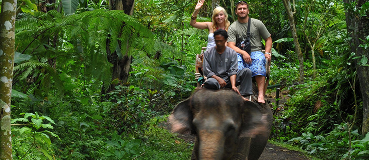 Elephant Safari Ride at Taro, Elephant Park Ubud, Ubud Experience, Bali