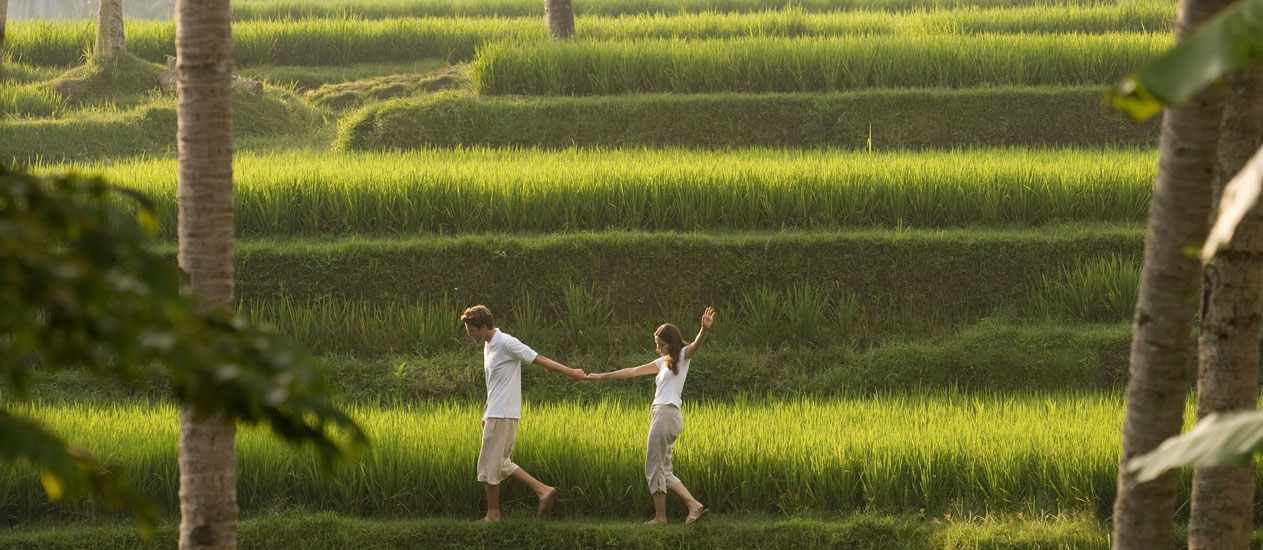 Village Trekking in rice paddies, Rice Paddy Walk, Ubud Experience, Kamandalu Ubud, Bali